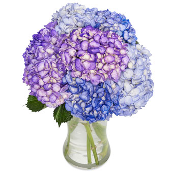 Blue hortensia bouquet