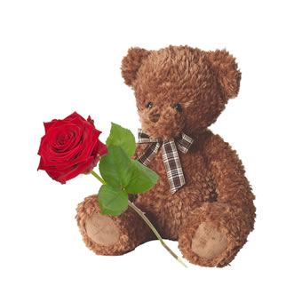 Red rose with XL teddy
