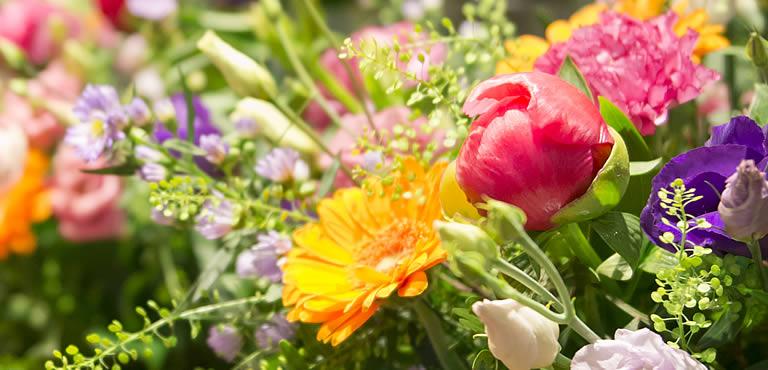 assortiment en fleurs