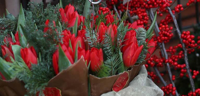 Tulipes de Noël