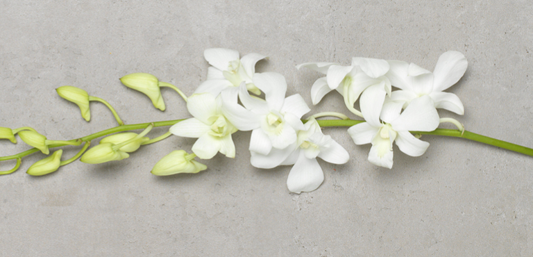 Care tips for orchids