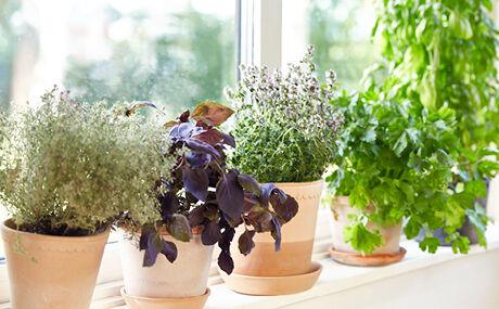 planten en licht