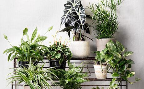 Bemest uw planten twee keer per jaar