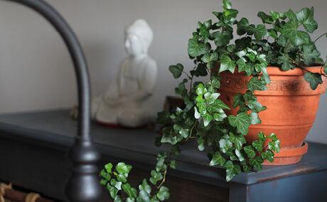 Complétez l'eau du vase si nécessaire