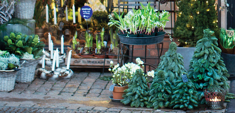 Kerstplanten